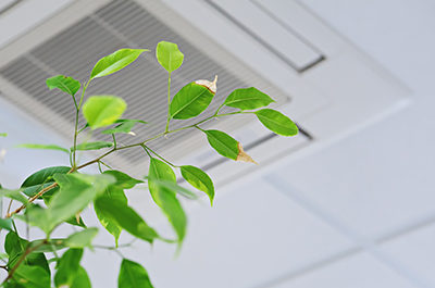 Green Plant And Air Vent